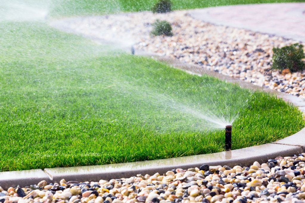 Watering new lawn with sprinklers