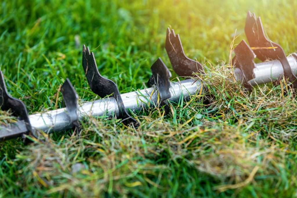 When is the best time to scarify a lawn